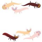 在白色背景的逗人喜爱的橙色桃红色棕色蝾螈漫画人物(墨西哥蝾,钝口螈属mexicanum)水族馆动物 Ve 库存照片
