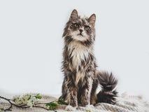 在白色背景的逗人喜爱,迷人的小猫 图库摄影