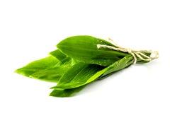 在白色背景的野生蒜叶子 免版税库存图片
