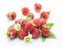 在白色背景的野草莓 图库摄影