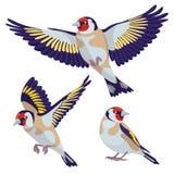 在白色背景的金翅雀 免版税库存照片