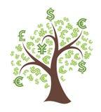 在白色背景的金钱树 库存图片