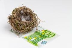 在白色背景的鸟的巢与钞票 免版税库存图片