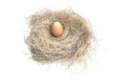 在白色背景的鸡蛋 免版税库存图片