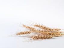 在白色背景的麦子小尖峰 免版税库存图片