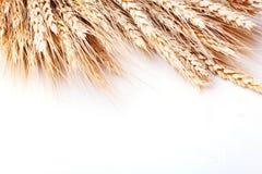 在白色背景的麦子 查出 日愉快的感恩 收获节日 顶视图 水平 免版税图库摄影