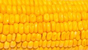 在白色背景的黄色玉米纹理 甜黄色玉米种子特写镜头 免版税库存图片