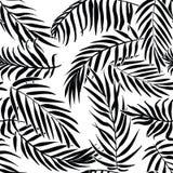 在白色背景的黑棕榈叶 热带剪影无缝的传染媒介样式 免版税库存照片