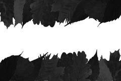 在白色背景的黑色叶子 免版税库存图片