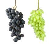 在白色背景的黑和绿色葡萄 垂悬在天空中的两葡萄束 免版税图库摄影