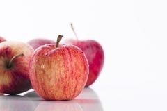 在白色背景的水多的红色苹果 库存照片