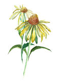 在白色背景的水彩花 库存例证
