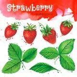 在白色背景的水彩草莓 库存图片