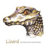 在白色背景的水彩蜥蜴 异乎寻常的动物 免版税库存图片