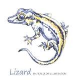 在白色背景的水彩蜥蜴 异乎寻常的动物 免版税图库摄影