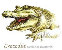 在白色背景的水彩鳄鱼 非洲动物 野生生物艺术例证 在T恤杉能打印 库存照片