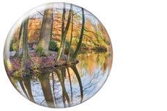 在白色背景的水晶球反射的秋天树干 免版税库存照片