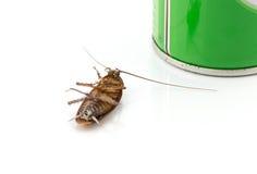 在白色背景的死的蟑螂 库存照片
