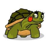 在白色背景的滑稽的绿海龟 库存图片