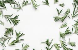 在白色背景的绿色叶子迷迭香 平的位置,顶视图 免版税库存图片