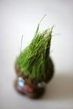 在白色背景的绿色新芽玩具semeni 免版税图库摄影
