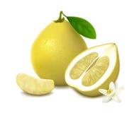 在白色背景的黄色柚果子 免版税库存图片