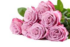 在白色背景的紫色玫瑰花束 图库摄影