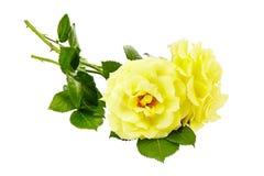 在白色背景的黄色玫瑰花束 免版税图库摄影