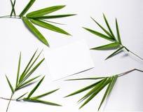 在白色背景的绿色竹叶子 温泉或秀丽横幅模板与地方文本的 免版税库存图片