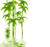 在白色背景的绿色竹子 库存例证