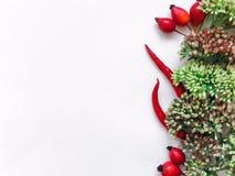 在白色背景的绿色花卉花圈框架 平的位置、顶视图、秋天或者冬天装饰 免版税库存图片