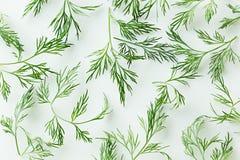 在白色背景的绿色莳萝 模式 装饰品 图库摄影