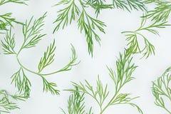在白色背景的绿色莳萝 模式 装饰品 免版税库存照片