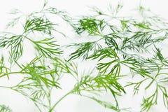 在白色背景的绿色莳萝 模式 装饰品 库存照片