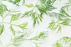 在白色背景的绿色莳萝 模式 装饰品 库存图片