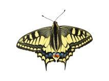 在白色背景的黄色蝴蝶-照片10 免版税库存图片