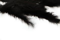 在白色背景的黑鹳羽毛 免版税库存图片
