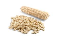 在白色背景的Choclo白色玉米国内食物 免版税图库摄影