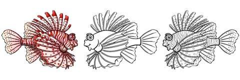 在白色背景的Loinfish colorfull 免版税图库摄影
