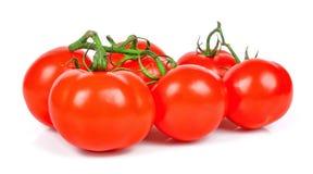 在白色背景蕃茄隔绝的束 库存图片