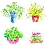 在白色背景设置的手拉的房子植物 向量例证