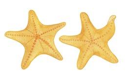 在白色背景设置的水彩海星 库存例证