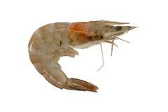 在白色背景隔绝的一只未加工的虾 裁减路线 免版税库存照片