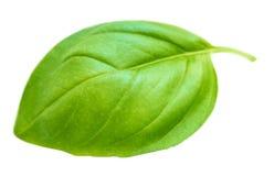 在白色背景隔绝的一片新鲜的蓬蒿叶子,宏指令 免版税库存照片
