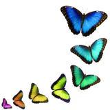 在白色背景隔绝的不同的颜色迅速移动的蝴蝶拼贴画  库存照片