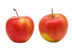 在白色背景隔绝的两个成熟苹果特写镜头  免版税图库摄影
