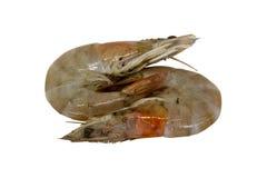 在白色背景隔绝的两只虾 裁减路线 图库摄影
