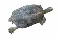 在白色背景隔绝的乌龟,裁减路线 库存照片