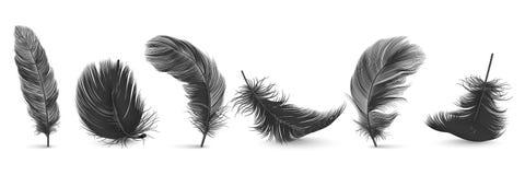 在白色背景隔绝的传染媒介3d现实另外落的黑蓬松旋转的羽毛集合特写镜头 设计 库存例证