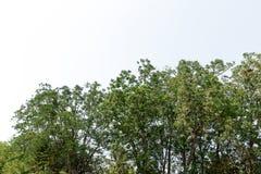 在白色背景隔绝的叶子 库存图片